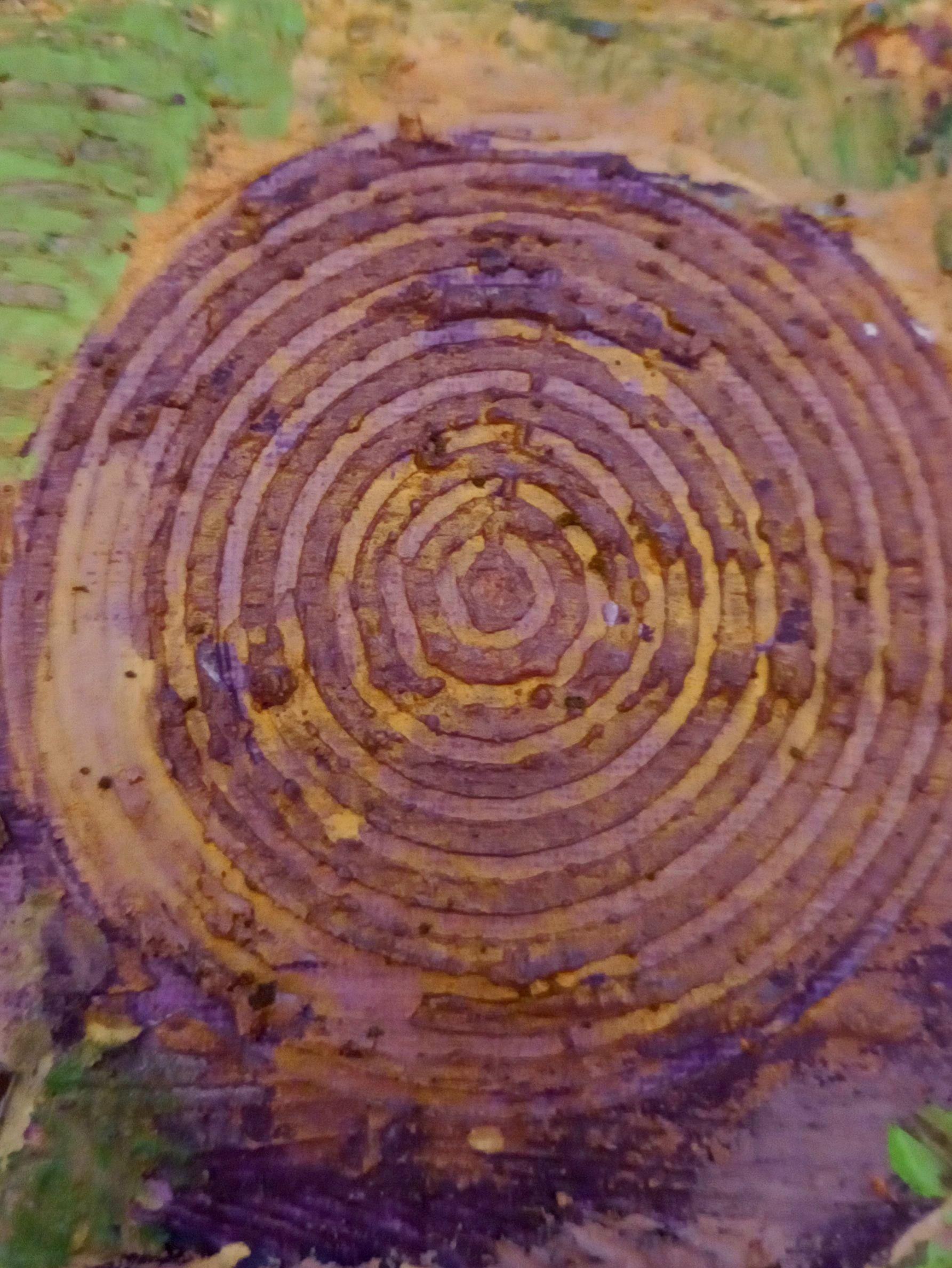 Land Art, Arte Ambiental -Teximora Bandín-